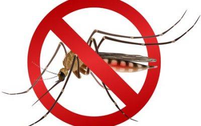 5 façons d'éviter que les moustiques vous piquent